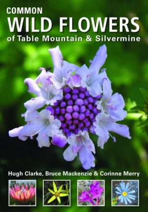 Common Wild Flowers Of Table Mountain and Silvermine